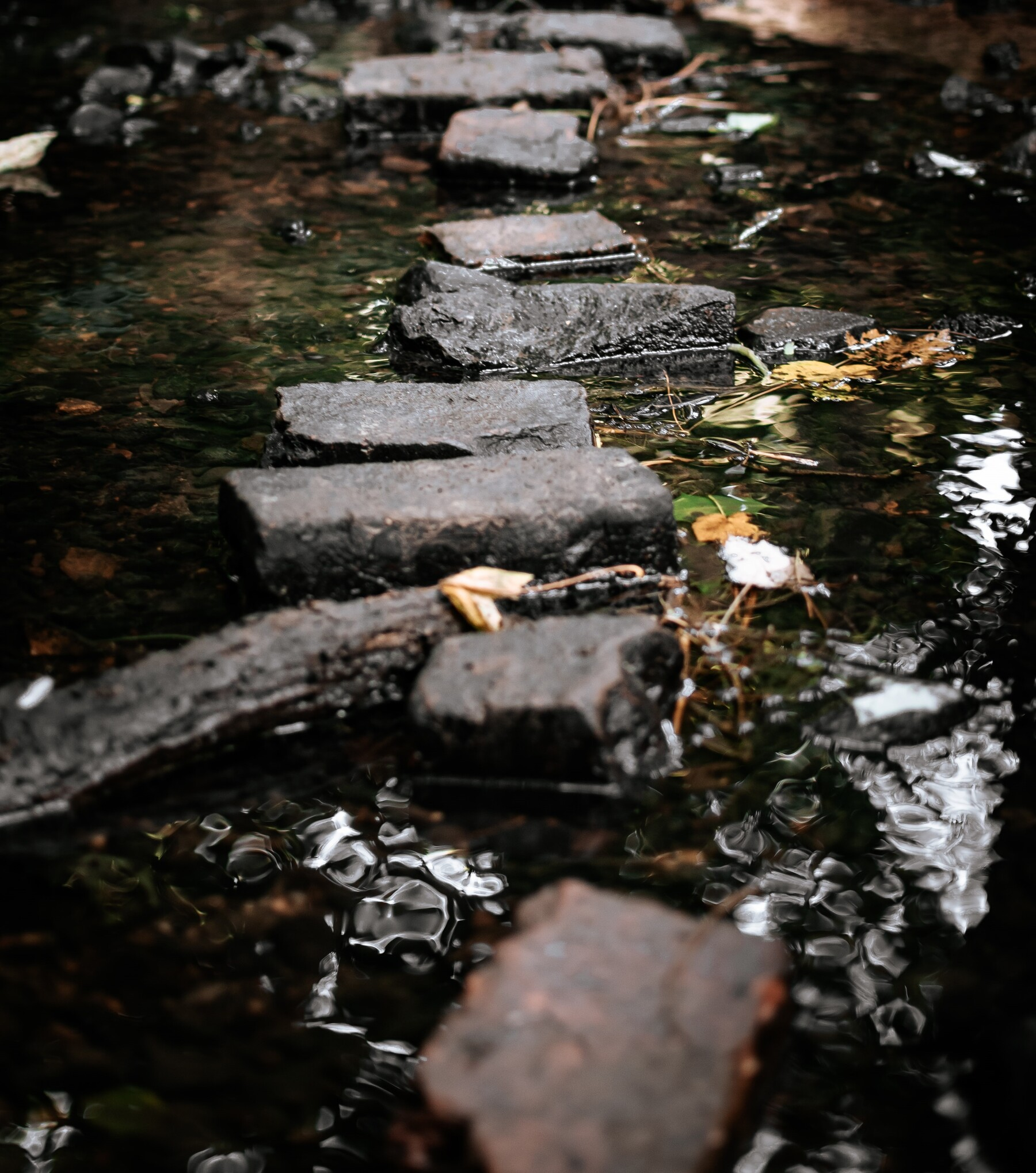 Photo of stepping stones across a stream